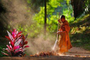 Huyết dụ thường được trồng tại chùa