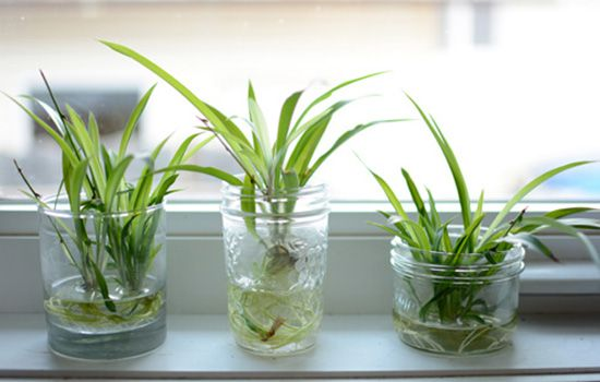 Cách trồng cây thủy sinh để bàn chi tiết từ A đến Z