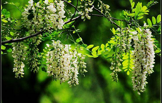 Tuổi ất sửu hợp cây gì? Hướng dẫn chọn cây phong thủy tuổi ất sửu