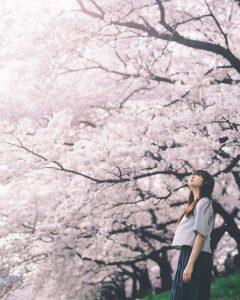 Hoa Anh Đào vào mùa hoa rất lãng mạn