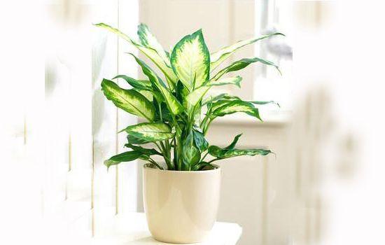 Tuổi giáp tý nên trồng cây gì trong nhà