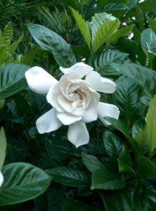 Hoa Bạch Thiên Hương thể hiện tình yêu trong sáng, thầm kín
