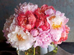Các màu của hoa mẫu đơn