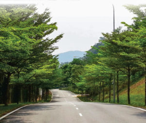 Cần chú ý 1 tháng đầu khi di chuyển và trồng bàng Đài Loan