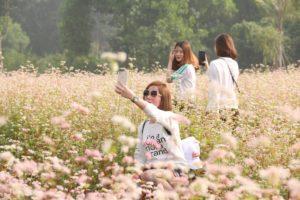 Vườn hoa tam giác mạch tại Hà Nội