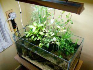 Bể cá có trồng thủy trúc