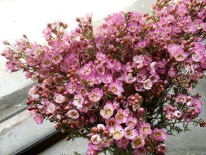 Hoa biểu trưng cho tình yêu lâu bền, giàu có và sung túc