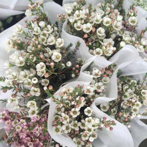 bó hoa Thanh Liễu đẹp
