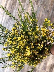 Hoa Thanh Liễu màu vàng
