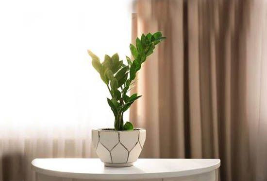 Tuổi mậu thìn nên trồng cây gì trong nhà