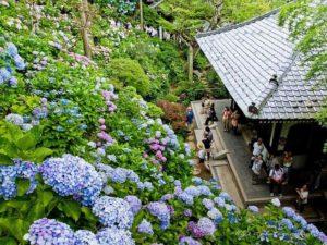 Vườn hoa Cẩm Tú tại Nhật Bản