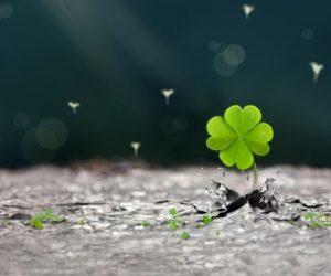 cây may mắn đem lại may mắn và tài vận cho gia đình