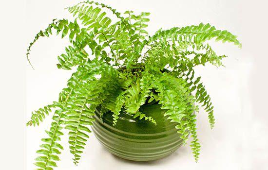 Tuổi mậu thìn nên trồng cây gì trong nhà cho hợp phong thủy