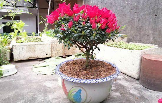 Tuổi ất hợi hợp cây gì
