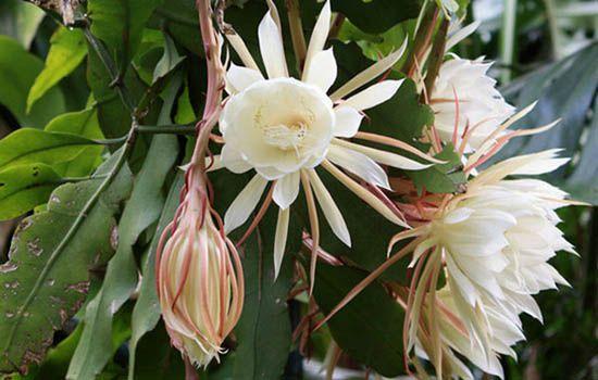 Tuổi nhâm thân hợp hoa gì? Chọn hoa cho tuổi nhâm thân theo mệnh