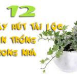 12 Cây phong thủy giúp gia chủ hút tài lộc