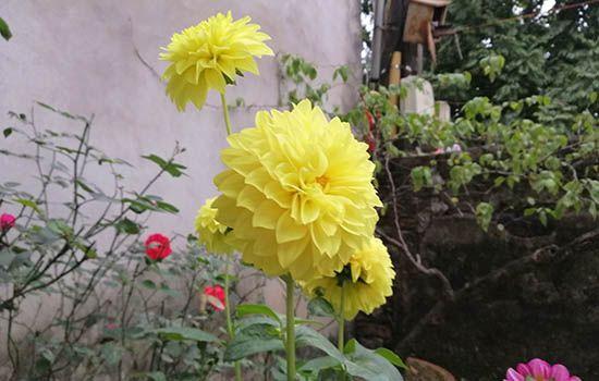 Tuổi đinh tỵ hợp với hoa gì? Một vài gợi ý chọn hoa cho tuổi đinh tỵ