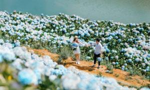 Vườn cẩm tú tại Đà Lạt