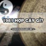 1981 hợp cây gì? Cách chọn cây hợp mệnh mộc 1981