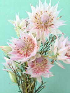Ngọc Sắc dùng trong nghệ thuật cắm hoa