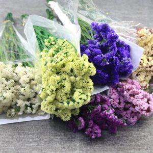 Hoa salem nhiều màu sắc, bền và khô không bị phai màu