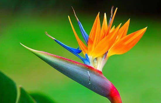 Cách chọn hoa để bàn làm việc theo phong thủy đơn giản mà đẹp