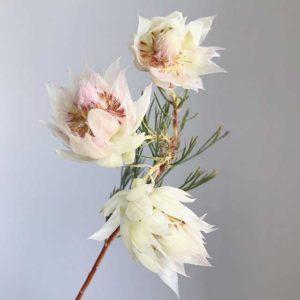 Hoa Ngọc Sắc thường mọc thành từng chùm
