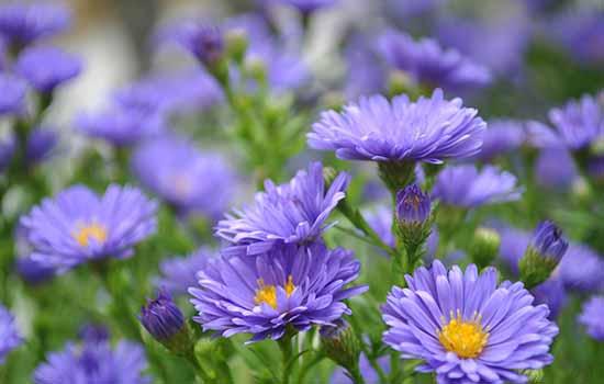 Tuổi kỷ tỵ hợp với hoa gì? không hợp với hoa gì?