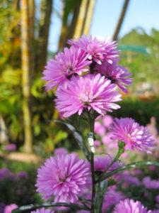 Hoa mang ý nghĩa về sự gắn bó bền chặt bên nhau