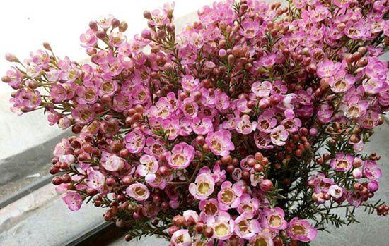 Tuổi kỷ mùi hợp với hoa gì