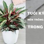 Tuổi kỷ mùi nên trồng cây gì trong nhà