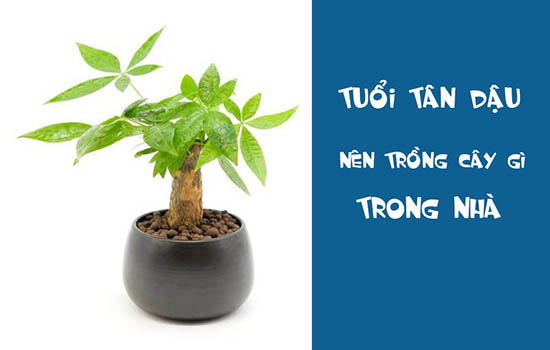 Tuổi tân dậu nên trồng cây gì trong nhà