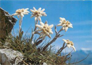 Cây hoa Thùy Trinh