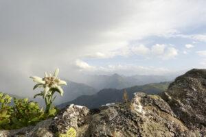 Thùy Trinh còn được coi là Quốc Hoa của Thụy Sỹ