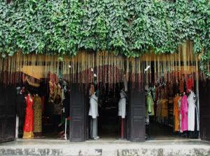 Cây dây tơ hồng Thái