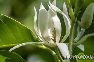 Tuổi Quý Dậu hợp hoa gì? Chọn hoa hợp phong thủy cho tuổi Quý Dậu
