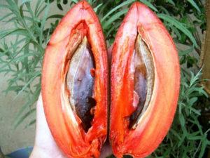 Cây hồng xiêm ruột đỏ