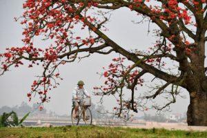Hoa Gạo tượng trưng cho những cảm xúc mãnh liệt, chung thuỷ và kiên trì trong tình yêu lứa đôi.