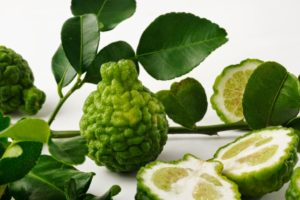 quả và lá cây chứa nhiều tinh dầu thơm và vị gắt hơn chanh nhiều lần