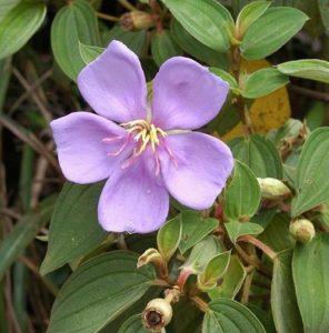 Hoa cây mua
