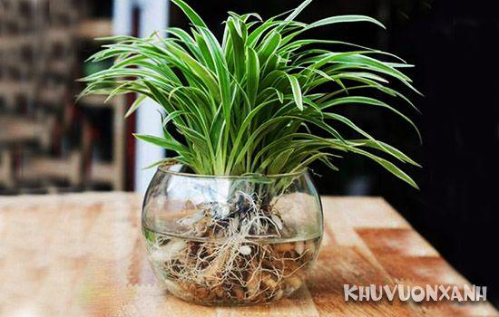Ý nghĩa cỏ lan chi trong cuộc sống và trong phong thủy