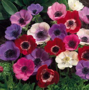 Hoa tượng trưng cho cuộc sống phú quý, viên mãn, bền chặt.