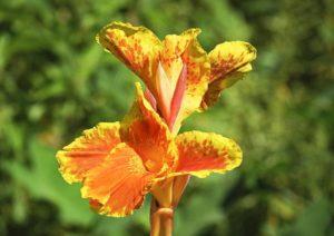 Màu hoa của nó rất rực rỡ, màu sắc tươi mới