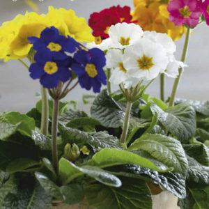 Hoa có nhiều màu sắc tươi tắn và rực rỡ