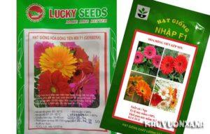Cách trồng hoa đồng tiền bằng hạt