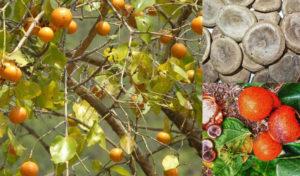 5 loài cây gây chết người nhanh nhất