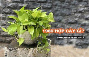1986 hợp cây gì