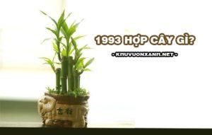 1993 hợp cây gì