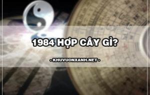 1984 hợp cây gì? Cách chọn cây phong thủy tuổi tý 1984
