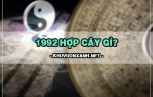1992 hợp cây gì? Cây phong thủy tuổi thân 1992